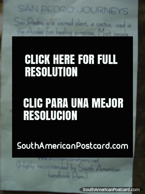 San Pedro é uma fábrica sagrada, um cacto, usado nos Andes para curar objectivos. (480x640px). Peru, América do Sul.