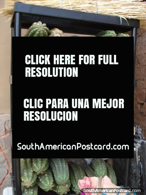 A rack of cut San Pedro cactus. (480x640px). Peru, South America.