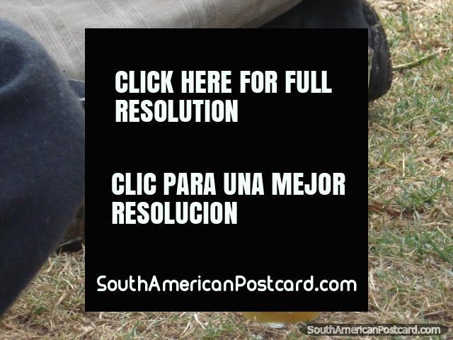 3 glasses of San Pedro cactus juice. (640x480px). Peru, South America.