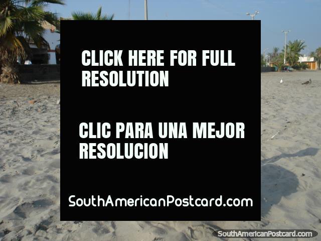 Pisco beach pelican. (640x480px). Peru, South America.