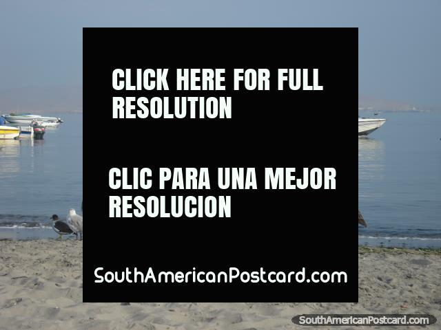 Barcos y birdlife en playa de Pisco. (640x480px). Perú, Sudamerica.