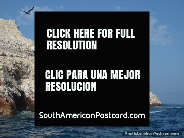 Islas Ballestas in Pisco, so much birdlife. (640x480px). Peru, South America.