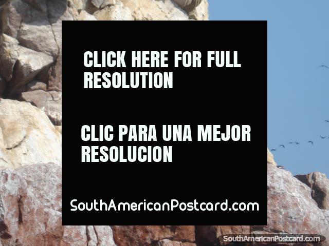A pair of seals sleep, Islas Ballestas. (640x480px). Peru, South America.