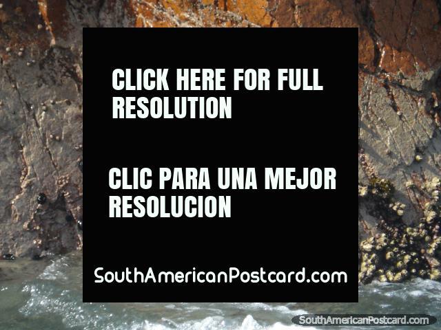 Pejesol atado a las rocas en Islas Ballestas en Pisco. (640x480px). Perú, Sudamerica.