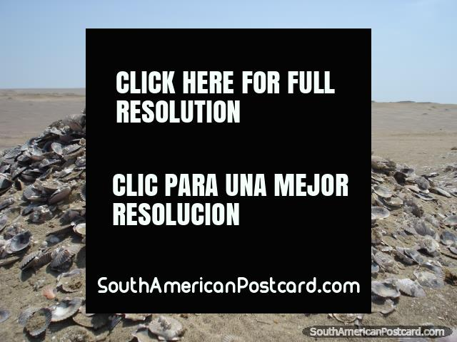 Huge pile of shells in the desert of Paracas National Park in Pisco. (640x480px). Peru, South America.