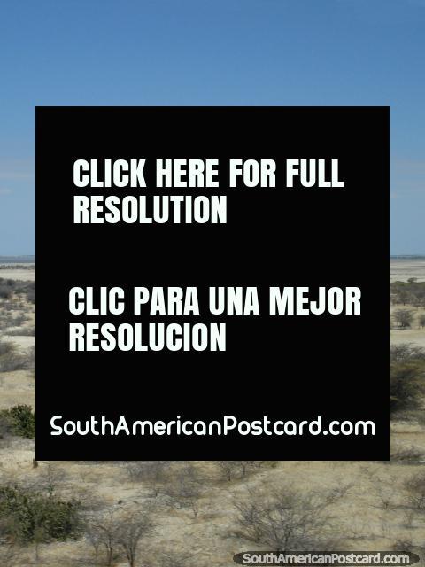 Arbustos y terreno triste en el desierto del norte al sur de Piura. (480x640px). Perú, Sudamerica.