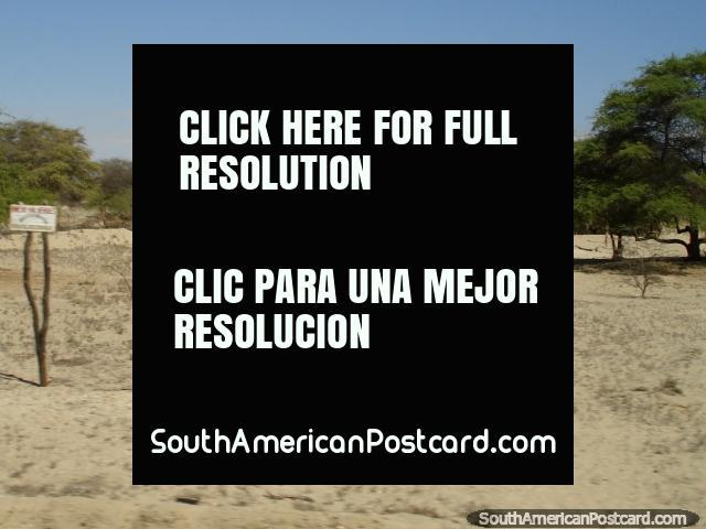 House in the sand surrounded by green trees in the northern desert south of Piura. (640x480px). Peru, South America.