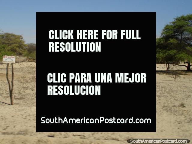A casa na areia rodeia-se de árvores verdes no deserto do norte ao sul de Piura. (640x480px). Peru, América do Sul.