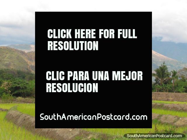 Montanha vermelha, palmeiras e arrozais ao norte de Jaén. (640x480px). Peru, América do Sul.