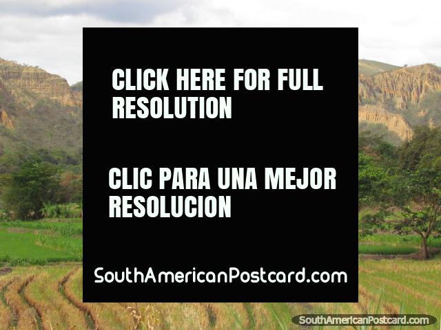 As formas de montanha contemplam do alto fazenda e campos de arroz ao norte de Jaén. (640x480px). Peru, América do Sul.