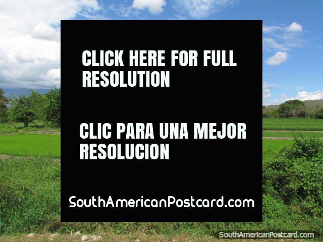 Jaén e Bagua Grande são áreas de crescimento de arroz importantes no Peru. (640x480px). Peru, América do Sul.