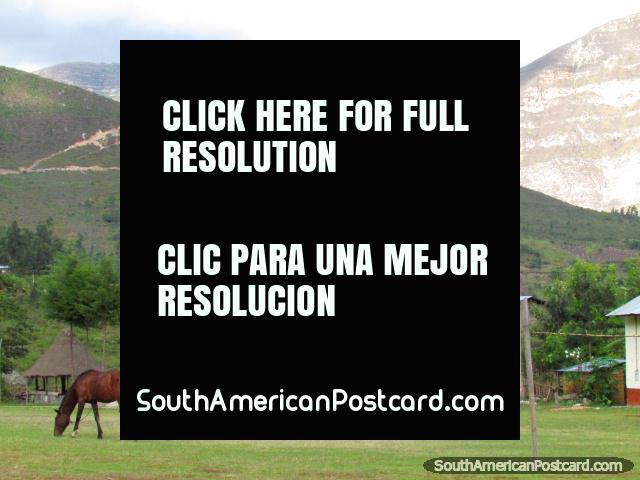 Contrate un caballo para montar a caballo a Caídas de Gocta del pueblo de Cocachimba cerca de Chachapoyas. (640x480px). Peru, Sudamerica.