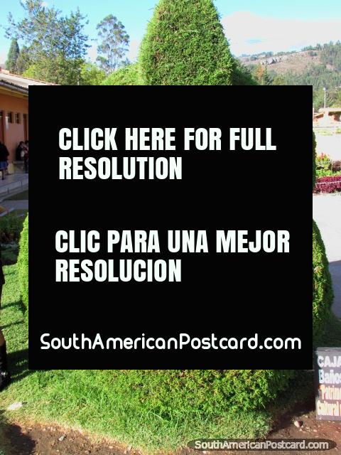Green bush sculpture at Banos del Inca in Cajamarca. (480x640px). Peru, South America.
