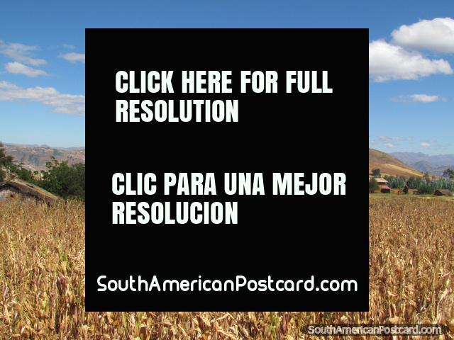 Crop fields scene between Cajabamba and Huamachuco. (640x480px). Peru, South America.