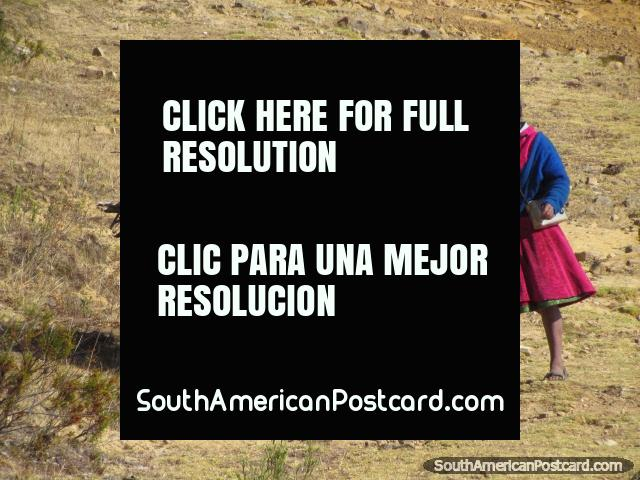 Indigenous woman and donkey with firewood at Marcahuamachuco. (640x480px). Peru, South America.