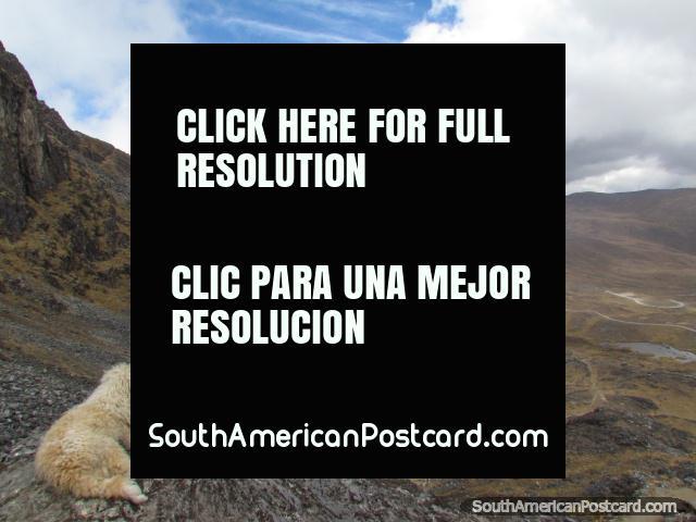 White dog looks down at the climb we made at Huaytapallana, Huancayo. (640x480px). Peru, South America.