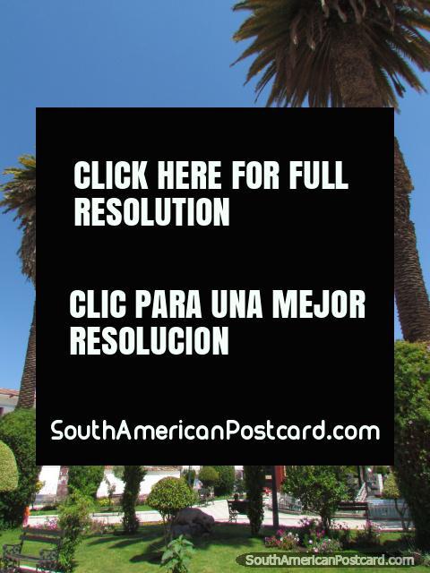 Jardines y palmeras en el Plaza de Armas en Abancay. (480x640px). Perú, Sudamerica.