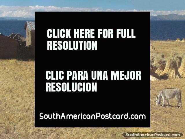 2 donkeys, haystacks and a house beside Lake Titicaca, around Zepita. (640x480px). Peru, South America.