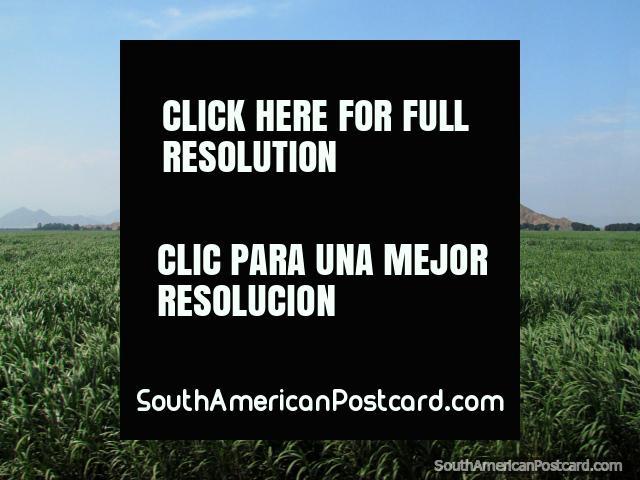 Campos cubiertos de hierba verdes y montañas entre Trujillo y Paijan. (640x480px). Perú, Sudamerica.