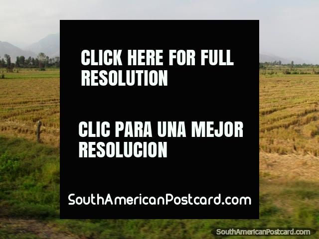 Hay fields and distant mountains north of Chepen. (640x480px). Peru, South America.