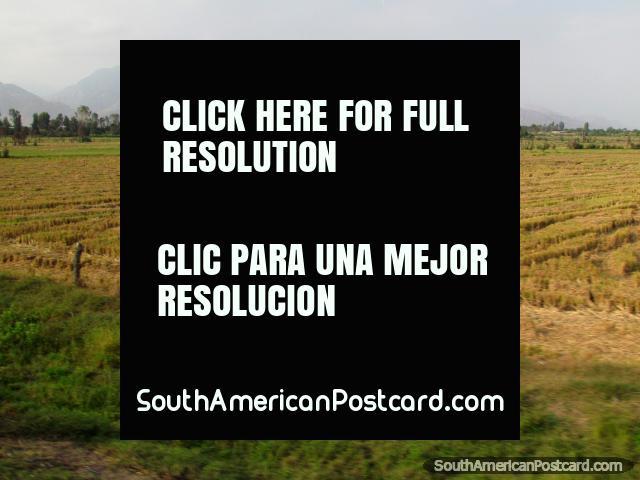 Campos de feno e montanhas distantes ao norte de Chepen. (640x480px). Peru, América do Sul.