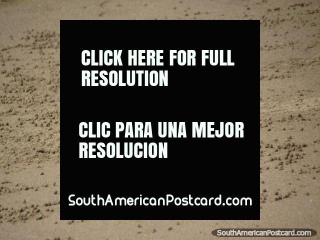 Os caranguejos fazem bolas de areia na praia de Mancora. (640x480px). Peru, América do Sul.