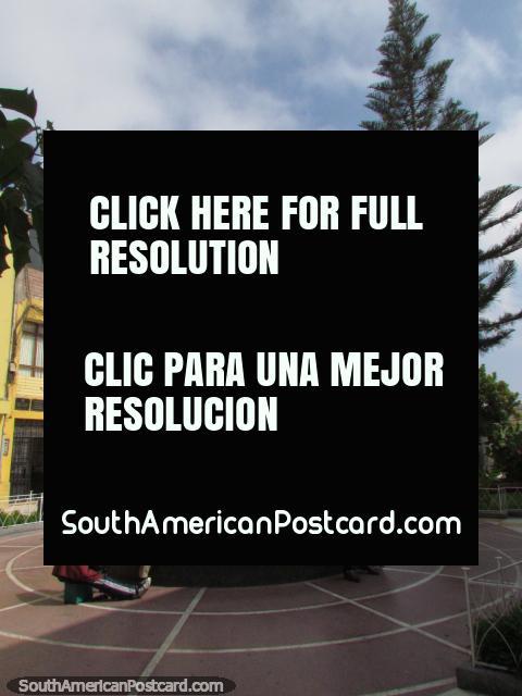 El hombre tiene sus zapatos brillados en una plaza con el alto árbol en Tacna. (480x640px). Perú, Sudamerica.