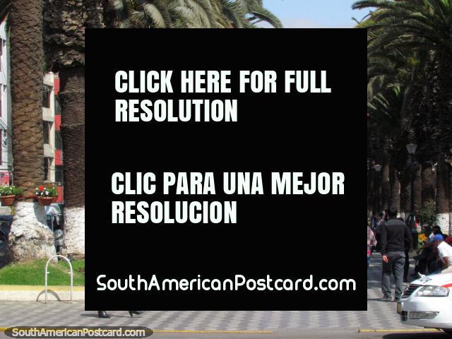 La gente de Tacna que va sobre allí negocio en el centro de ciudad. (640x480px). Perú, Sudamerica.