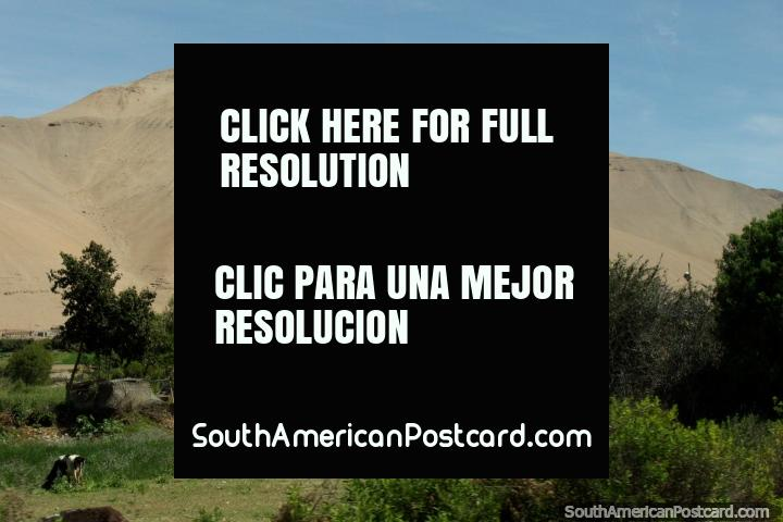 Colinas rocosas de arena y un valle verde a Moquegua. (720x480px). Peru, Sudamerica.