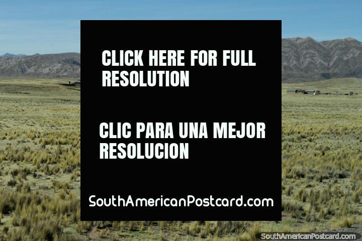 A viagem de 6 horas de Tacna a Desaguadero passa pastos e colinas rochosas. (720x480px). Peru, América do Sul.