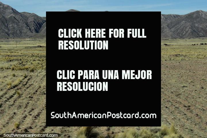 Tierras de cultivo y pastos en frente de un fondo rocoso, al oeste de Desaguadero. (720x480px). Perú, Sudamerica.