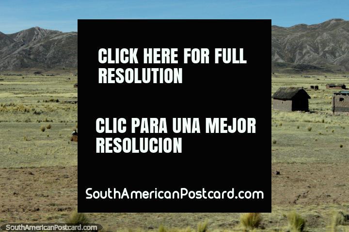Um par de lhamas em uma fazenda ao oeste de Desaguadero. (720x480px). Peru, América do Sul.