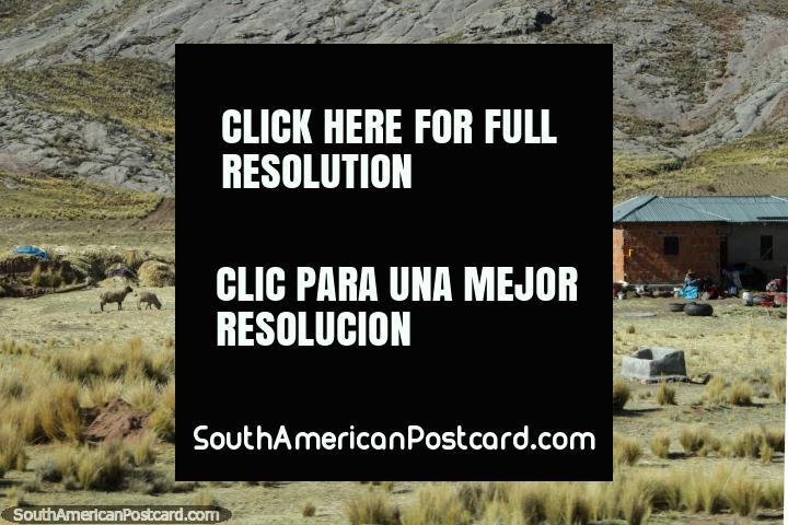 Casa da fazenda, feno e animais em terra em baixo de colinas rochosas, ao oeste de Desaguadero. (720x480px). Peru, América do Sul.