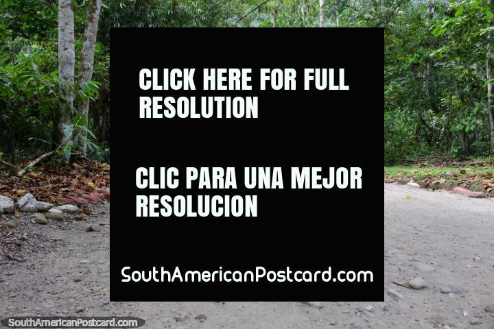 La ruta de senderismo en el Parque Nacional de Tingo María desde la entrada. (720x480px). Peru, Sudamerica.