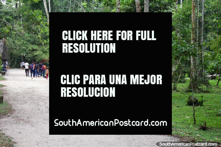 Caminho na selva verde em parque nacional Tingo Maria. (720x480px). Peru, América do Sul.