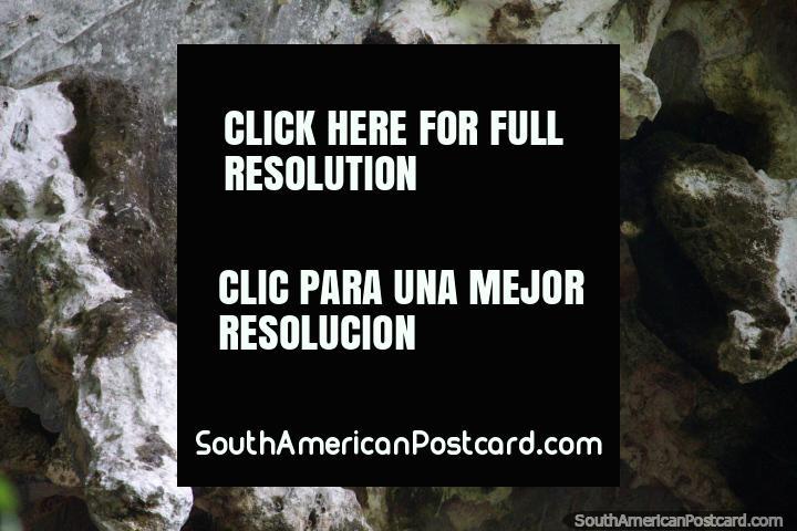 Un par de pájaros fuera de la cueva de las lechuzas en el Parque Nacional de Tingo María. (720x480px). Peru, Sudamerica.