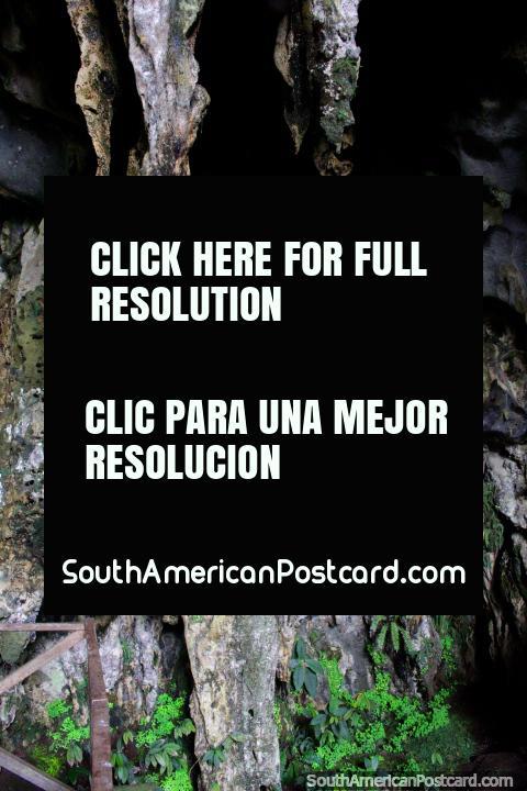 Las paredes de la cueva de las lechuzas desde el exterior, el Parque Nacional de Tingo María. (480x720px). Peru, Sudamerica.