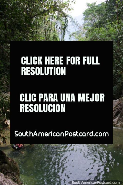Watery pools in the forest around Tingo Maria, Catarata Santa Carmen. (480x720px). Peru, South America.