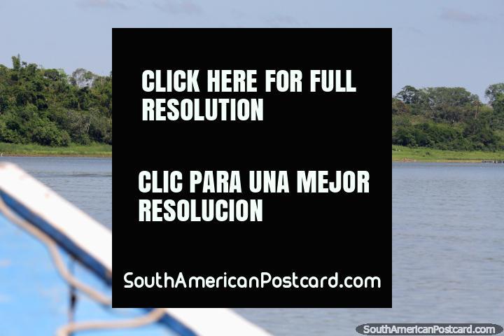 Gostar estando no lago em Pucallpa, procurando pássaros e vida selvagem! (720x480px). Peru, América do Sul.