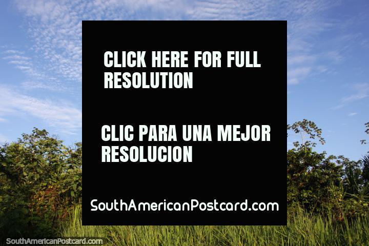 Encabeçar de carro de Pucallpa no Amazônia em direção a Tingo Maria. (720x480px). Peru, América do Sul.