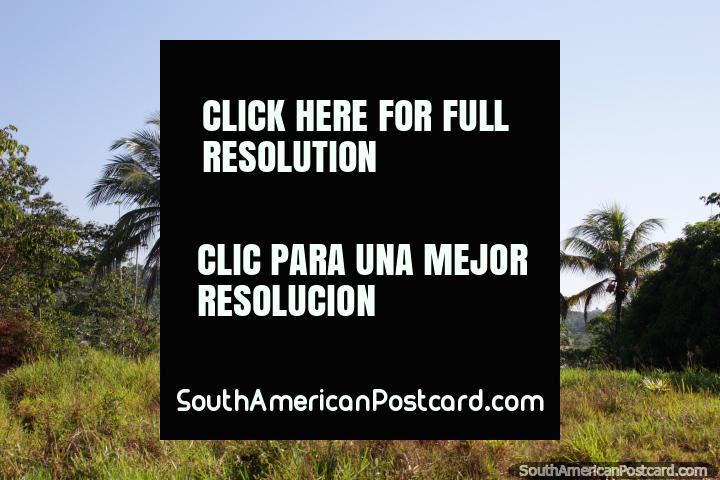 Half house, half shack, nice palm trees, Amazon living, between San Alejandro and Aguaytia. (720x480px). Peru, South America.