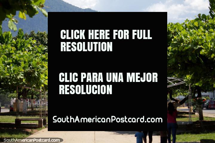 La parte más bonita de la ciudad central en Tingo María es el parque y la plaza! (720x480px). Perú, Sudamerica.