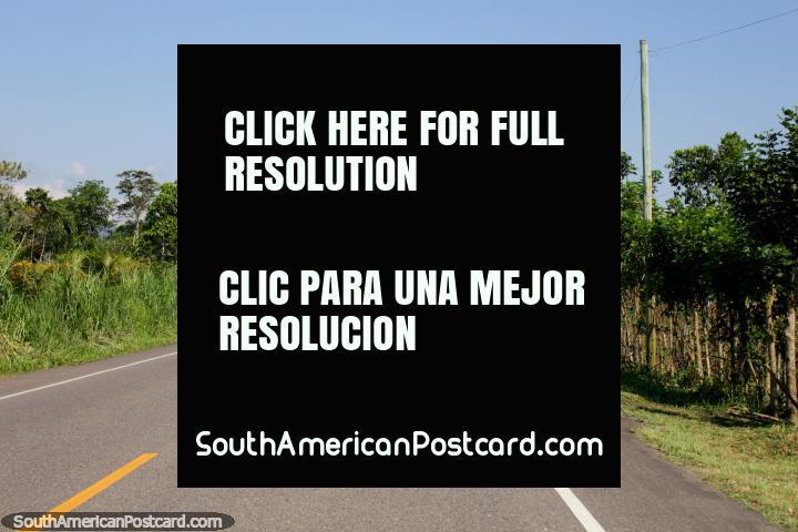 O caminho em volta de Pendencia entre Tingo Maria e Tocache. (720x480px). Peru, América do Sul.