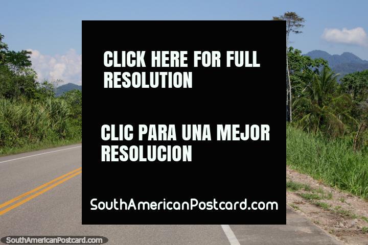 El camino es bueno alrededor de Los Olivos entre Tingo María y Tocache. (720x480px). Perú, Sudamerica.