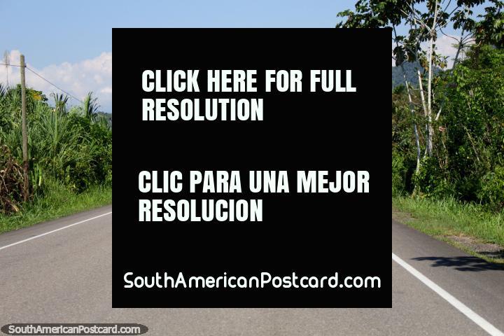 La parte más fácil del viaje de Tingo María a Tarapoto, camino sellado y seguro. (720x480px). Perú, Sudamerica.
