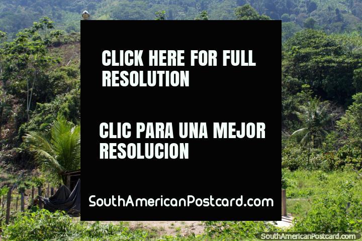 Casa de madeira com 2 nïveis, colinas atrás, Tingo a Tocache. (720x480px). Peru, América do Sul.