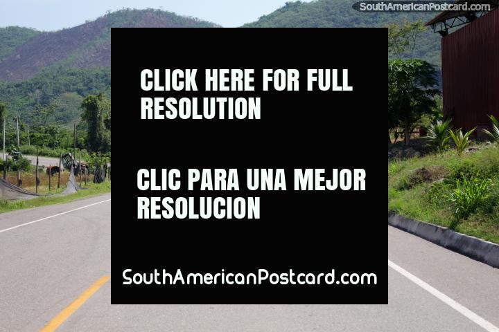 Road north of Huinguillo, heading towards Juanjui, nice green Amazon. (720x480px). Peru, South America.