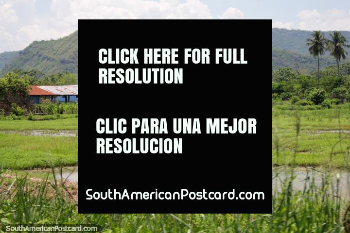 Watery grass field, buildings and house, green hills behind, open country, south of Tarapoto. (720x480px). Peru, South America.