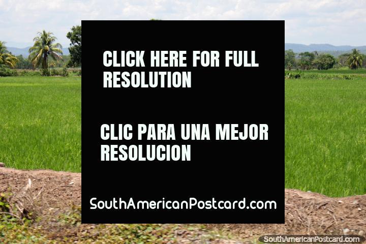 Praderas al norte del espeso bosque de Pacota, estamos al sur de Tarapoto. (720x480px). Perú, Sudamerica.