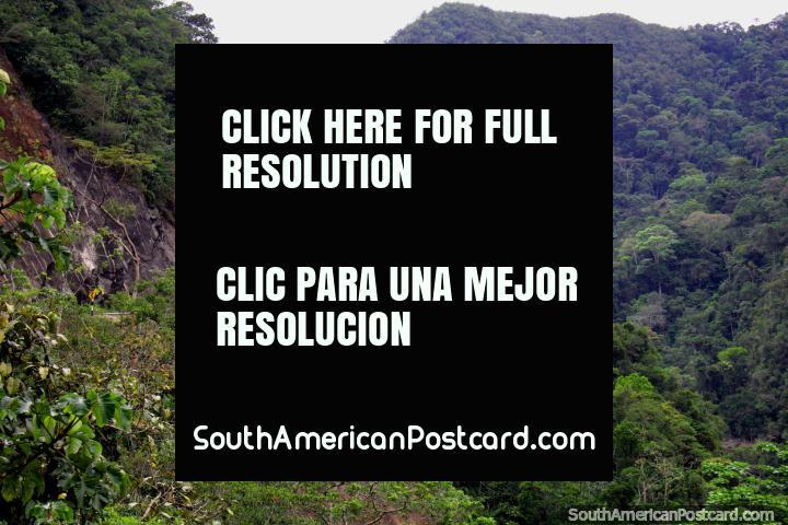 Road winds around the jungle ridge, dense forest, Tarapoto to Yurimaguas. (720x480px). Peru, South America.